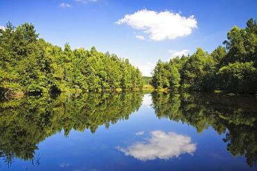 Neckar River origin, river head, Schwenninger Moos, Baden-Wuerttemberg, Germany, Europe