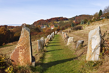 Stone avenue, Celtic megalith replicas, Geyersberg, Bergen municipality in the Dunkelsteinerwald area, Wachau, Mostviertel region, Lower Austria, Austria, Europe