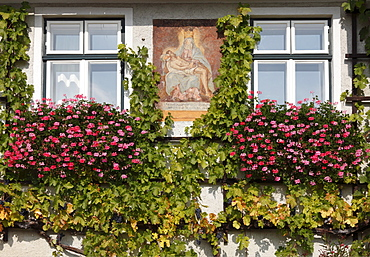 Mary icon on a house facade with vines and geraniums, Weingut Franz Hirtzberger vinyard, Spitz, Wachau, Waldviertel, Lower Austria, Austria, Europe
