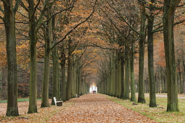 Avenue lined with oak trees (Quercus) without leaves, Karlsaue, Kassel, North Hesse, Germany, Europe