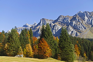 Autumn forest on the Schwaegalp alpine pasture with peaks of Mt. Saentis, Canton Appenzell, Switzerland, Europe