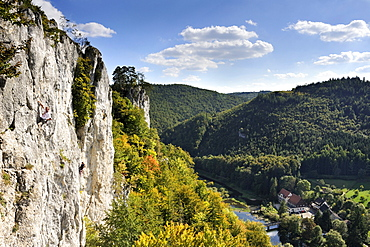 Falkenwand, a rock wall used for climbing, between Thiergarten and Neidingen in the Upper Danube Valley, district of Sigmaringen, Baden-Wuerttemberg, Germany, Europe