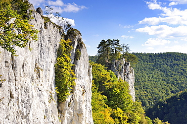 Falkenwand, a rock wall used for climbing, in front of a rocky spur with remains of Burg Unterfalkenstein Castle in the Upper Danube Valley, district of Sigmaringen, Baden-Wuerttemberg, Germany, Europe