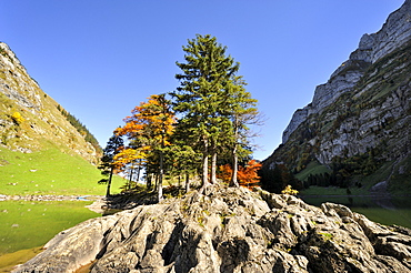 Fissured rocks with autumnal vegetation on the banks of Seealp Lake, at 1143 m altitude, in the Appenzell Alps, Canton of Appenzell Inner-Rhodes, Switzerland, Europe