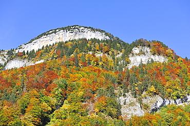 Autumn coloured beech forest in the Appenzeller Alps near Wasserauen, Canton of Appenzell Inner-Rhodes, Switzerland, Europe
