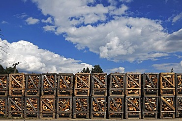 Stacked boxes of firewood for sale at a timber yard, Ziegelhuette 7, Lauf an der Pegnitz, Middle Franconia, Bavaria, Germany, Europe
