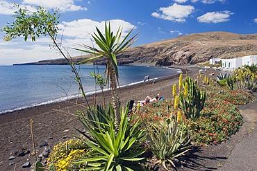 Aloe Vera flower on the beach of Playa Quemada, Lanzarote, Canary Islands, Spain, Europe