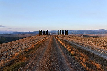Gravel road leading to a gate of cypress trees in wide Tuscanian landscape, late afternoon, Orcia Valley, Tuscany, Italy, Europe