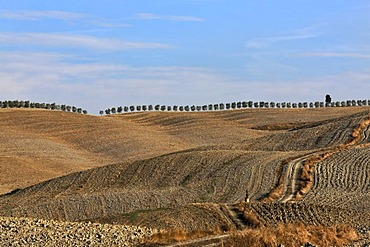 Rural landscape with hills, pathway, harvested fields and row of trees on horizon, Val díOrcia Valley, UNESCO World Heritage Site, Tuscany, Italy, Europe