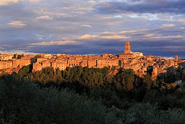 View across olive trees to medieval town of Pitigliano situated on a volcanic limestone plateau with Campanile on the right, evening light, Maremma, Tuscany, Italy, Europe