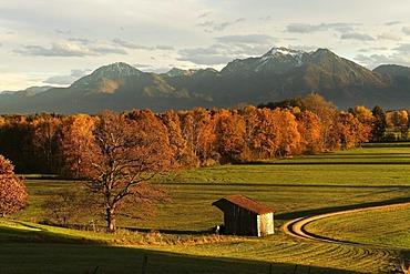 Autumnal landscape, Chiemgau, Upper Bavaria, Germany, Europe
