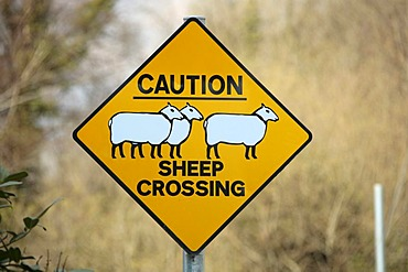 Warning sign, sheep crossing, County Wicklow, Ireland, Europe