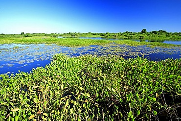 Landscape with water, Pantanal, Brazil, South America