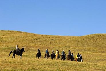 Cowboys at Bison Roundup, Custer State Park, Black Hills, South Dakota, USA, America