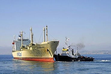 Cargo ship and tug boats, ship maneuver, port, Coquimbo, La Serena, Norte Chico, northern Chile, Chile, South America