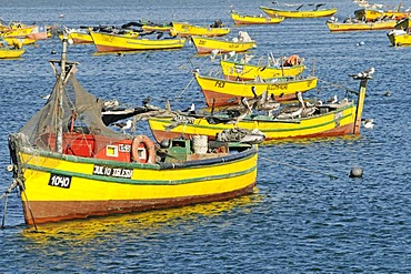 Colorful fishing boats, the sea, the harbor, Coquimbo, La Serena, Norte Chico, Northern Chile, Chile, South America