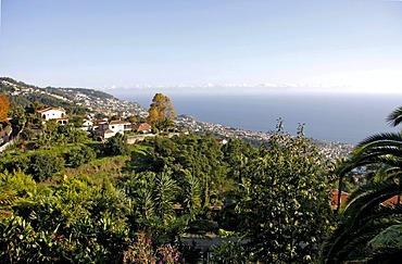 Tropical garden, Monte Palace Tropical Garden, Jose Bernardo Foundation, Funchal, Madeira, Portugal, Europe