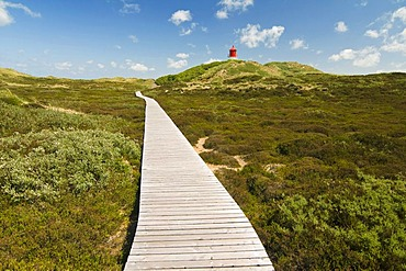 Boardwalk and dunes, Amrum, North Frisia, Schleswig-Holstein, Germany, Europe