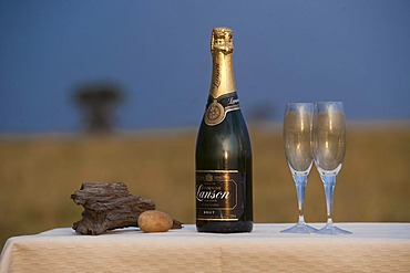 Champagne arrangement, sun downer, Africa
