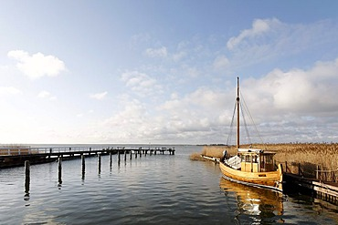 Traditional, small wooden boat anchored in a harbour on the bodden, morning mood, holiday area of Born am Darss, Fischland-Darss-Zingst, Mecklenburg-Western Pomerania, Germany, Europe