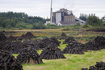 Peat briquettes stacked to dry on piles in front of a peat briquettes factory, near Birr, Offaly, Midlands, Ireland, Europe
