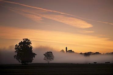 The church of Seeg in early morning fog, Ostallgaeu, Bavaria, Germany, Europe