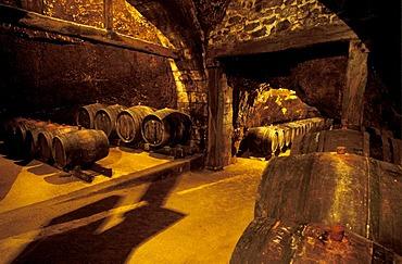 Wine cellar of Maison Audebert et Fils, Bourgueil, Indre-et-Loire, Loire Valley, Centre, France, Europe