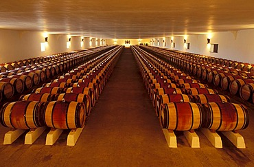 Oak wine barrels, wine cellar, Chateau Mouton-Rothschild in Pauillac, Haut-Medoc, Aquitaine, France, Europe