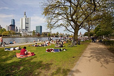 People sunbathing at the waterfront of the Main river, popular meeting point in summer, financial district at back, Frankfurt, Hesse, Germany, Europe