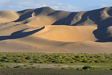Lush green grass landscape in front of the large sand dunes Khorgoryn Els in the Gobi Desert, Gurvan Saikhan National Park, Oemnoegov Aimak, Mongolia, Asia