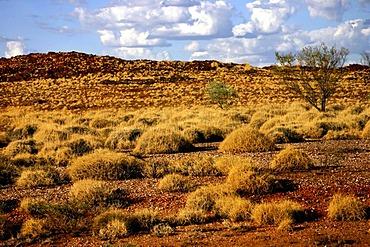 Spinifex grass landscape, Pilbara, Northwest Australia