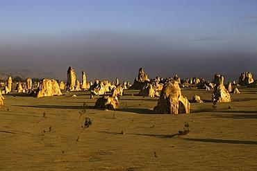 Pinnacle sandstone formations, Nambung National Park, Western Australia, Australia