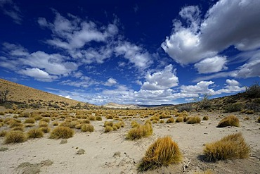 Steppe grass tufts with a blue sky, Monte Leon National Park, Rio Gallegos, Patagonia, Argentina, South America