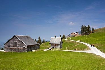 Mountain pasture of the Alpstein mountain range at springtime, viewed towards Mt Faenerenspitz, Appenzell, Switzerland, Europe