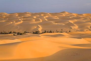 Um el Ma Oasis and sand dunes, Libyan Desert, Libya, Sahara, North Africa, Africa
