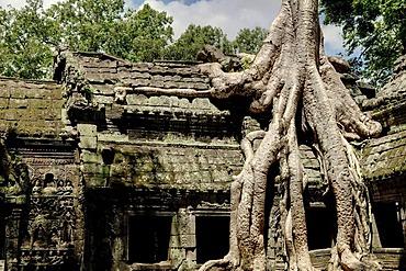 Ta Prohm, Angkor Wat complex, Siem Reap, Cambodia, Southeast Asia, Asia