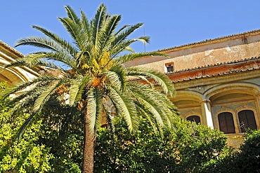 Palm tree, garden, inner courtyard, San Jeronimo de Cotalba monastery, Sant Jeronimo, Alfauir, Gandia, Costa Blanca, Alicante province, Spain, Europe