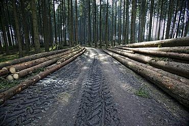 Timber industry in the forest near Meinerzhagen, Sauerland, North Rhine-Westphalia, Germany, Europe