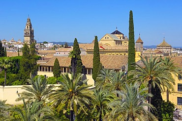 Alcazar de los Reyes Cristianos, Alcazar of Catholic Kings, and minaret tower of the Great Mosque, Cordoba, Andalusia, Spain, Europe