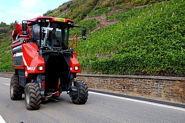 Harvestmachine on the way to next vineyard in Moselle valley, Rhineland-Palatinate, Germany, Europe