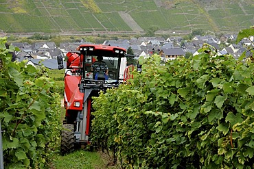 Harvestmachine in a vineyard in Moselle valley, Rhineland-Palatinate, Germany, Europe