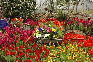 Arrangement of spring flowers with gardening tools, Palmengarten, Frankfurt am Main, Hesse, Germany, Europe