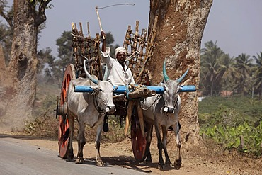 Ox cart near Chamarajnagar, Karnataka, South India, India, South Asia, Asia