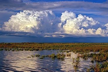 Huge cumulus cloud above the vast landscape of the Camargue, Alpilles in the back, Alpilles, Provence, southern France, France, Europe