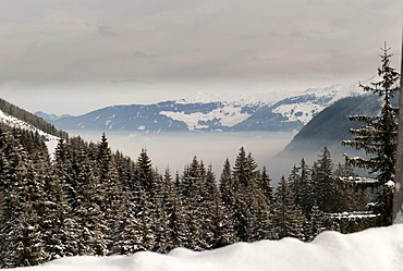 Atmospheric inversion, snow-covered forest, Austria, Europe