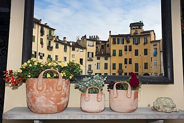 Piazza del Mercato square reflected behind flower pots, Lucca, Tuscany, Italy, Europe
