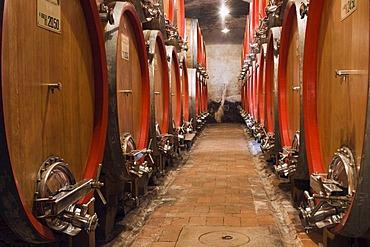 Wine barrels in the cellar of the Badia di Coltibuono winery, Chianti, Tuscany, Italy, Europe