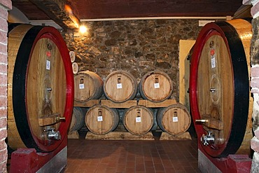 Wine barrels, wine cellar in the Brunello winery, Fattoria dei Barbi, Podernovi, Montalcino, Tuscany, Italy, Europe