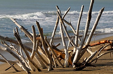 Dead trees and branches on the Marrema Coast, Tuscany, Italy, Europe