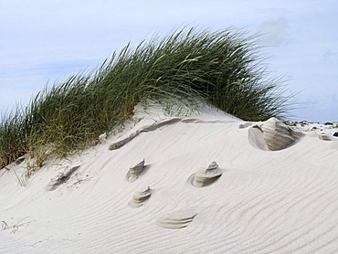 Wind formed sand sculptures in sand dunes, island of Amrum, Schleswig-Holstein, Germany, Europe